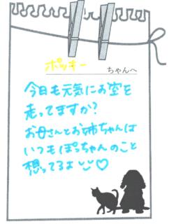 ポッキーちゃんへのメッセージ